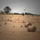 Crows dancing in the hay by Barry Goble