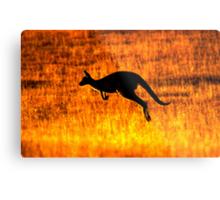 Kangaroo Sunset Metal Print
