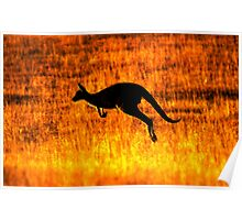 Kangaroo Sunset Poster