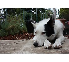 Hard life for a dog. Photographic Print