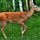 Young Doe by Larry Trupp