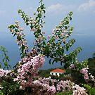 Skopelos by photoloi