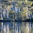 Bedlam Creek Reflections NSW Australia by Bev Woodman