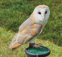 Barn Owl by Vicki Spindler (VHS Photography)