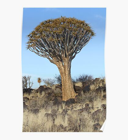 Quiver tree - Southern Namibia Poster