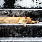 Cat Nap by Nancee Rainaud