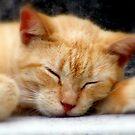 ET Sleeping by Nancee Rainaud