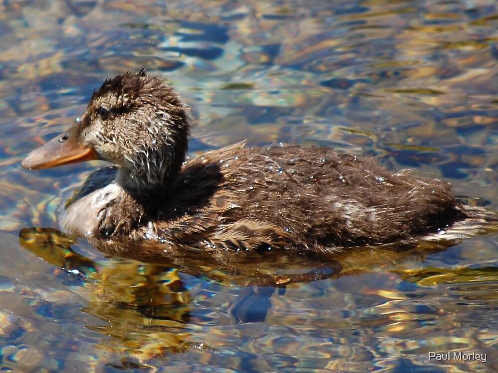 Ugly Duckling by Paul Morley