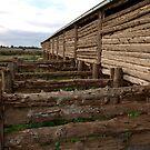 Mungo Shearing Shed by Imagebydg