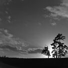 Trees at dusk by Ray Allen