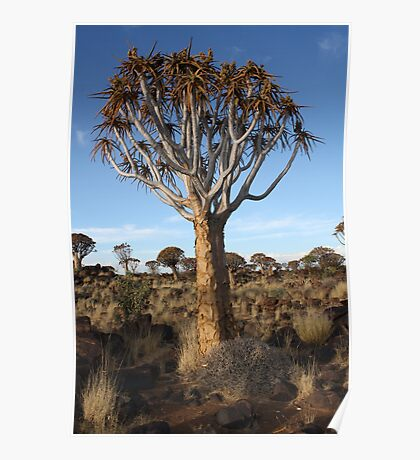 Quiver tree, Namibia Poster