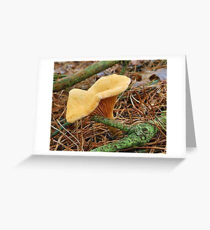 Saffron milk cap Greeting Card