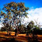 Black Hill Creek, Silverton, NSW by Imagebydg