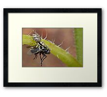 The Moment of Capture Framed Print