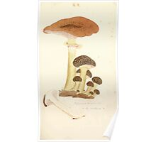 Coloured figures of English fungi or mushrooms James Sowerby 1809 0261 Poster