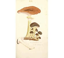 Coloured figures of English fungi or mushrooms James Sowerby 1809 0261 Photographic Print