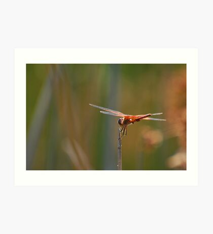 Dragonfly Acrobatics Art Print