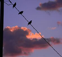 Birds on a Wire by Leyla Hur