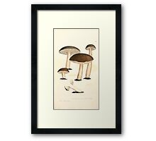 Coloured figures of English fungi or mushrooms James Sowerby 1809 0459 Framed Print
