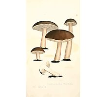 Coloured figures of English fungi or mushrooms James Sowerby 1809 0459 Photographic Print