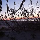 Sunset through weeds by Jacker