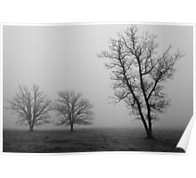 Three Trees in the Fog Poster