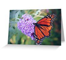 Feeding Monarch Greeting Card