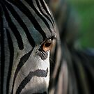 Zebra's Eye by Scotch Macaskill