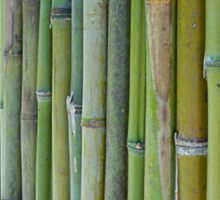 Green bamboo fence background Sticker