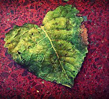 Green Heart by Maria  Gonzalez