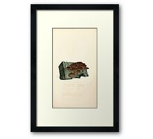 Coloured figures of English fungi or mushrooms James Sowerby 1809 0111 Framed Print