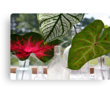 Three Leafs and Bottles Canvas Print