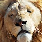 Lion Macro by loz788