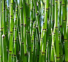 Green bamboo background by Atanas Bozhikov