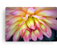 A Soft Touch! Canvas Print