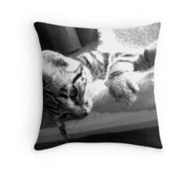 Tabby in Silver Throw Pillow