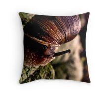Home is where the shell is Throw Pillow