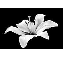 White lily - monochrome Photographic Print