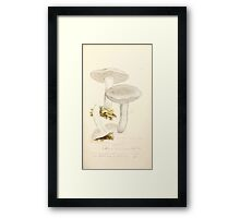 Coloured figures of English fungi or mushrooms James Sowerby 1809 0271 Framed Print