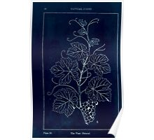 A Handbook Of Ornament With Three Hundred Plates Franz Sales Meyer 1896 0062 Natural Forms Vine Natural Inverted Poster