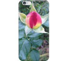 Yellow and Pink rose-2 iPhone Case/Skin