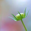 Infinitude Shall Be My Blossom by Lars Basinski