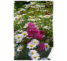 Valerian and Oxeye Daisies Poster