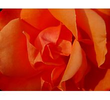 Fiery rose Photographic Print
