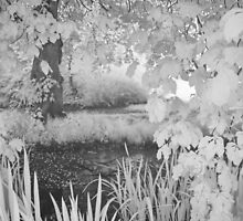 Secret Pool - Iinfrared by Ann Garrett