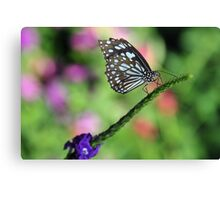 tatterred wings Canvas Print