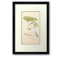 Coloured figures of English fungi or mushrooms James Sowerby 1809 0361 Framed Print