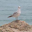Lone Seagull (2134) by Tony Payne