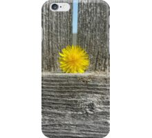 Dandelion on a Fence iPhone Case/Skin