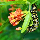Busy Caterpillar by Susan Blevins